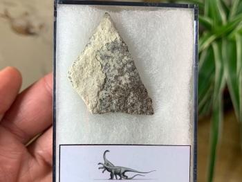 Saltasaurus Sauropod Eggshell #03