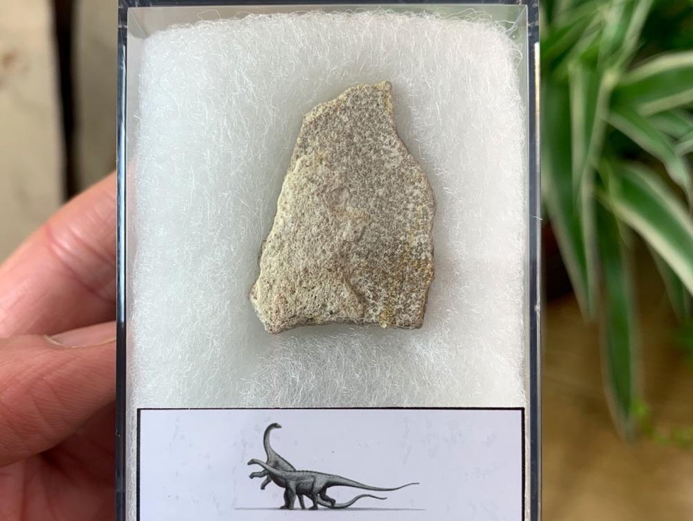 Saltasaurus Sauropod Eggshell #05