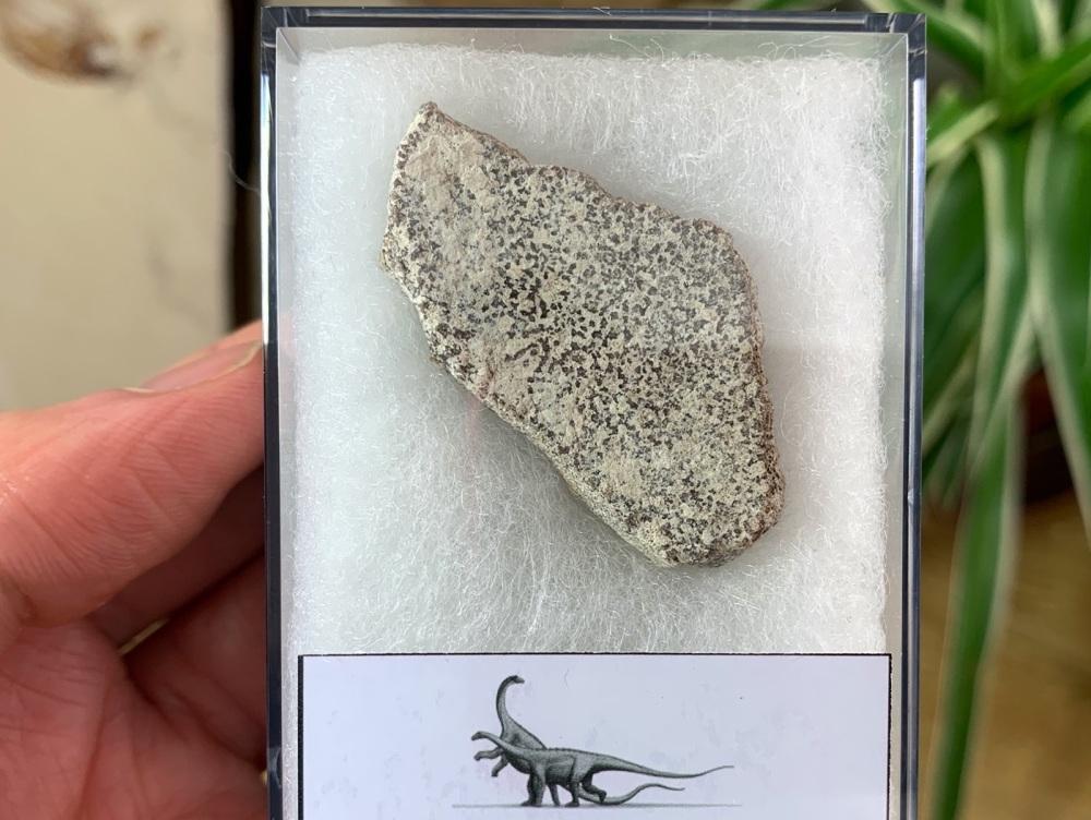 Saltasaurus Sauropod Eggshell #08