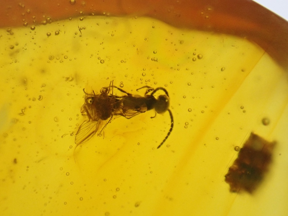 Dominican Amber Inclusion #30 (Bee)