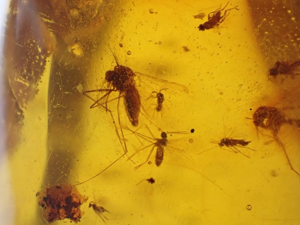 Dominican Amber Inclusion #38 (Swarm of Flies)