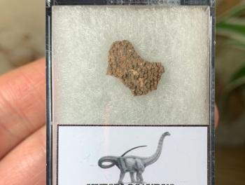 Hypselosaurus Sauropod Eggshell #08