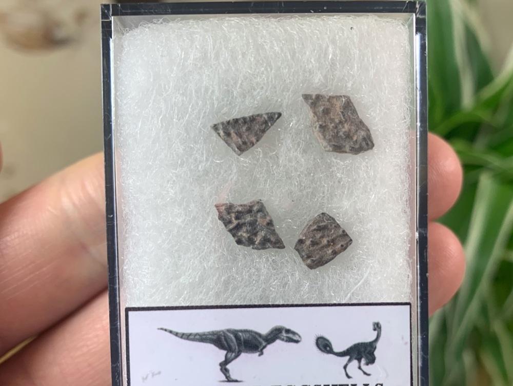 Theropod Dinosaur Eggshells (Nanxiong, China) #04