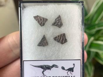 Theropod Dinosaur Eggshells (Nanxiong, China) #05