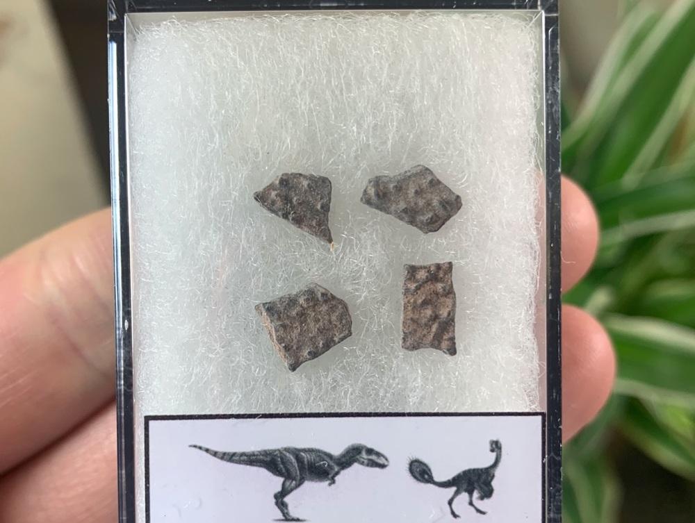 Theropod Dinosaur Eggshells (Nanxiong, China) #08