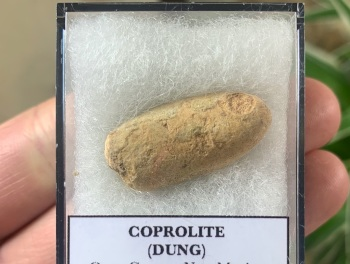 COPROLITE (DUNG), BULL CANYON FM. #04