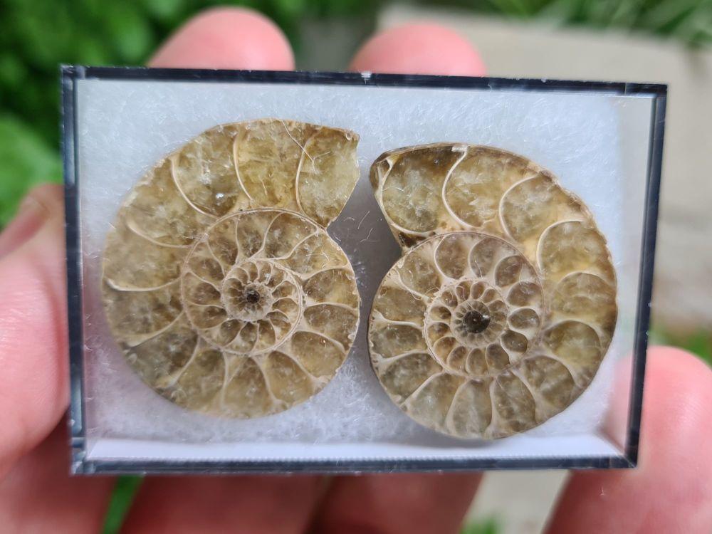 Cut & Polished Ammonite (pair) #04