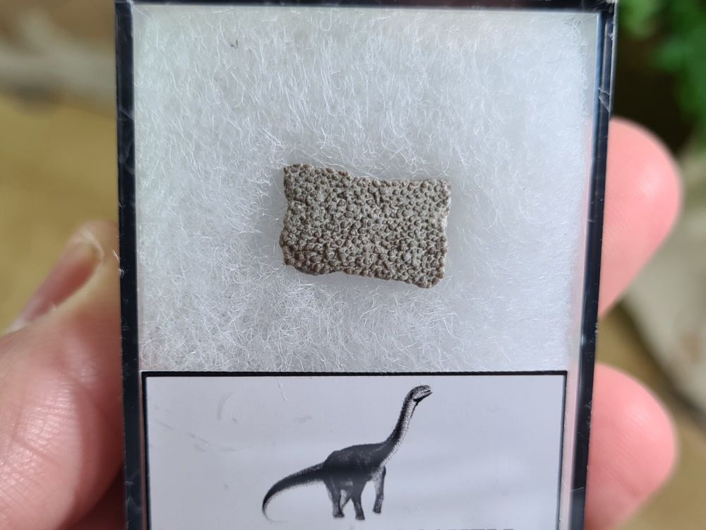 Titanosaur Sauropod Eggshell, France #08
