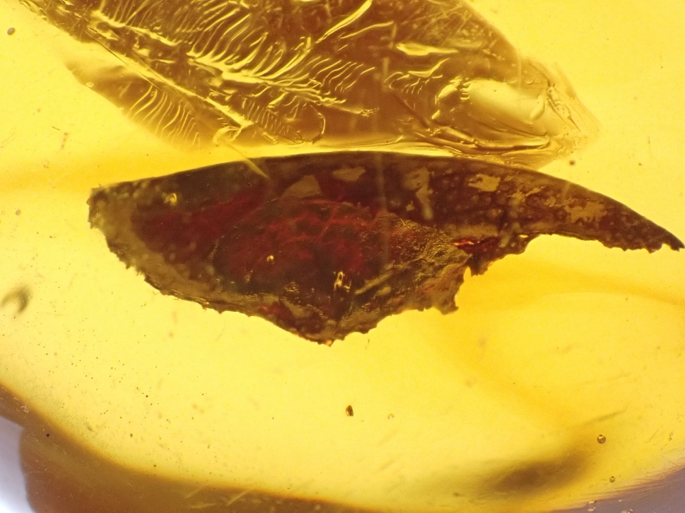 Dominican Amber Inclusion #09 (Leaf)