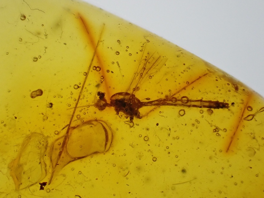 Dominican Amber Inclusion #10 (Cranefly and legs)