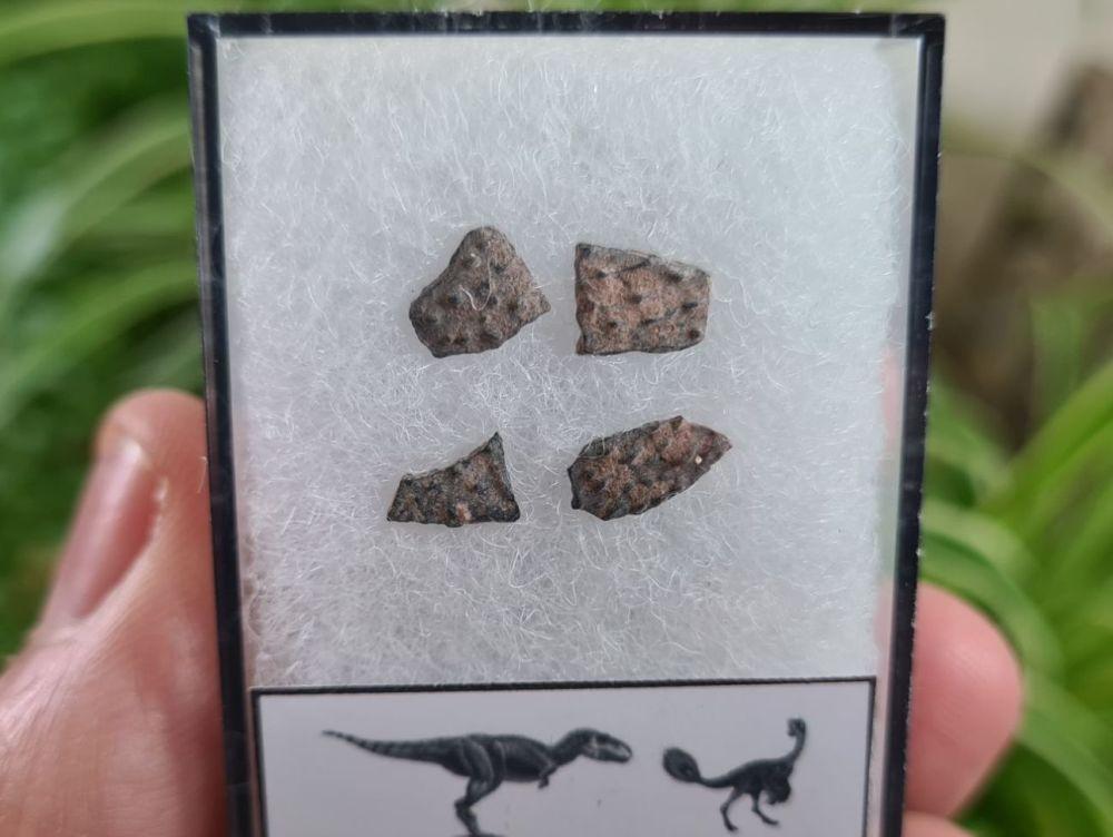 Theropod Dinosaur Eggshells (Nanxiong, China) #15