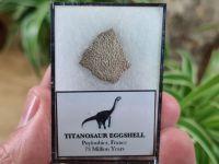 Titanosaur Sauropod Eggshell, France #02