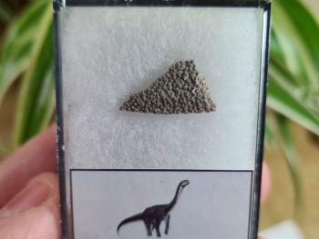 Titanosaur Sauropod Eggshell, France #09