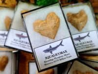 Squalicorax Shark Tooth
