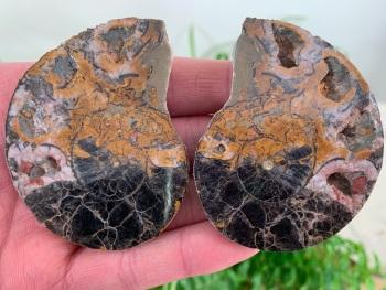 Cut & Polished Haematite Ammonite #05