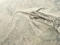 Reptiles & Pterosaurs