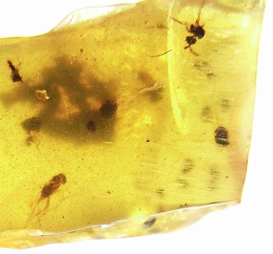 Burmite Amber with Diptera (Fly) Inclusions #2