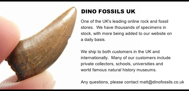 dinofossilsuk homepage2