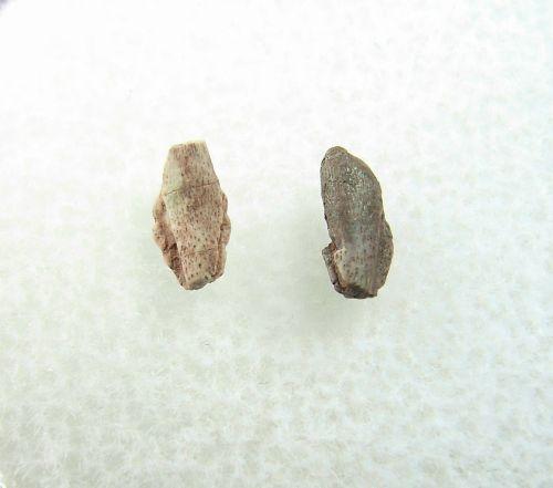 Apachesaurus Claws #01