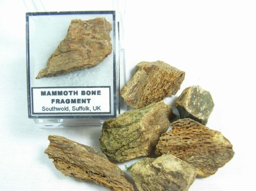 Mammoth Bone Fragment