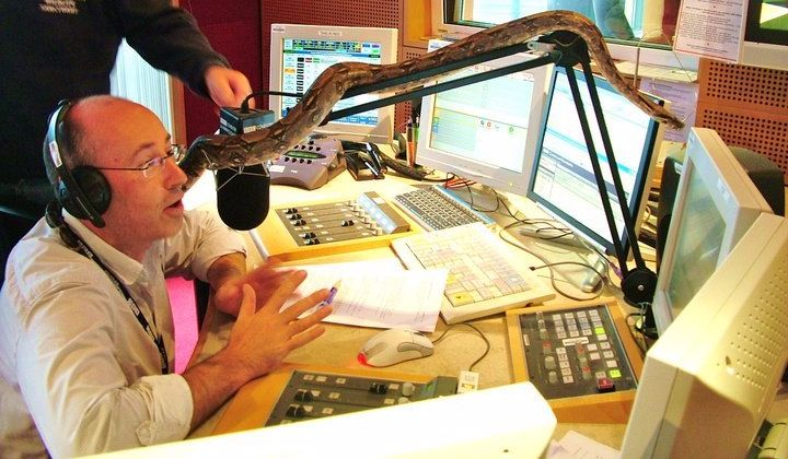 snakes phobia on the radio