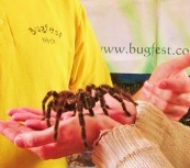 taratula end your fear of spiders with hypnotherapy