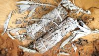 Ethically Sourced Californian White Sage & Lavender Smudge Sticks