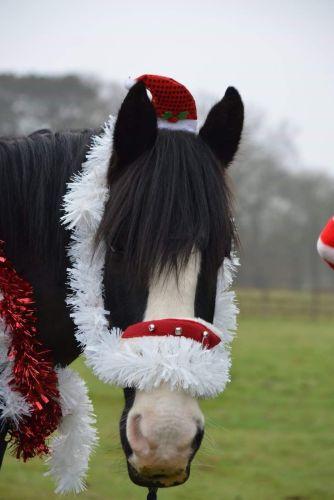 Christmas duke (2)