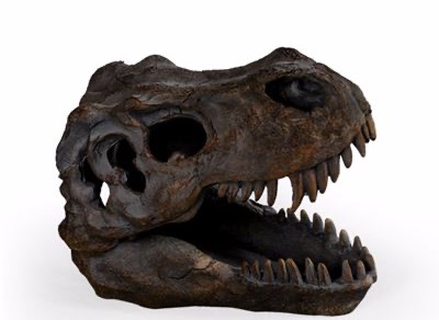 Small T Rex Skull Table Decor