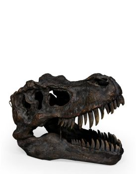 Extra large T-Rex Skull Table Decor