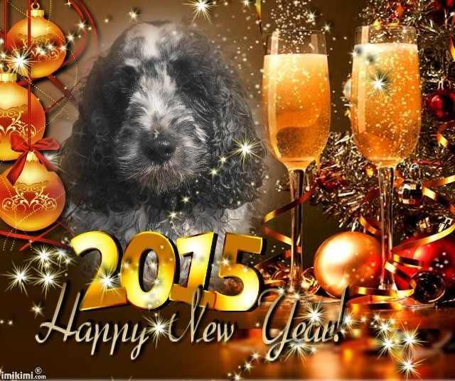 happy new year 2015 - marv