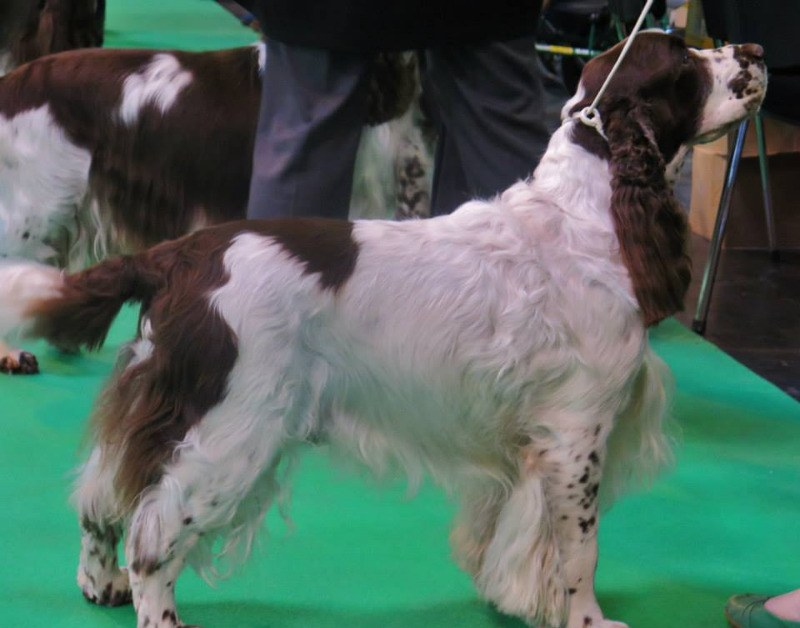 oliver at crufts 2015