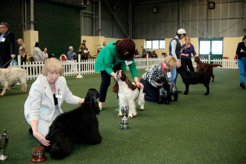 winter jkc show - group placings