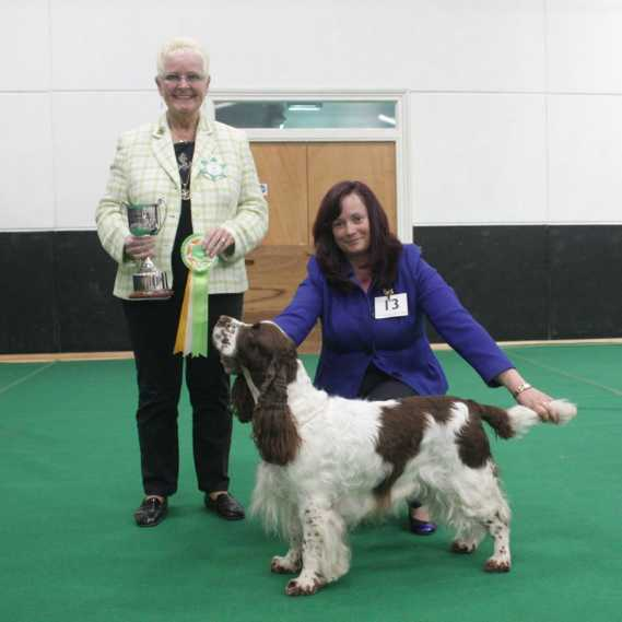 oliver reserve best veteran in show - 17 may 2015