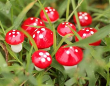 20pcs Mini Mushroom Garden Ornament