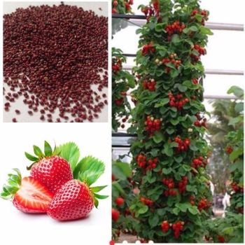 200pcs Strawberry Climbing Strawberry Fruit Plant Seeds