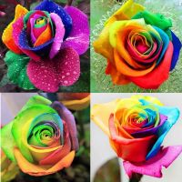 200pcs Colorful Rainbow Rose Flower Plant Seeds