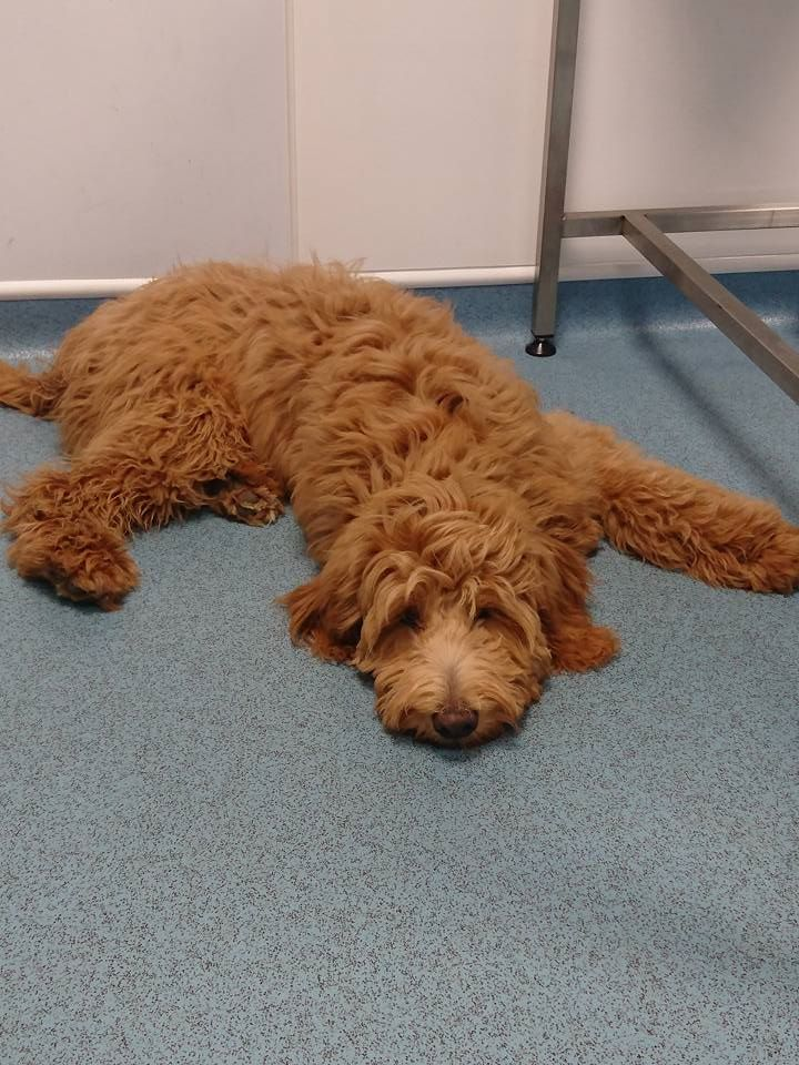 Barney lying down