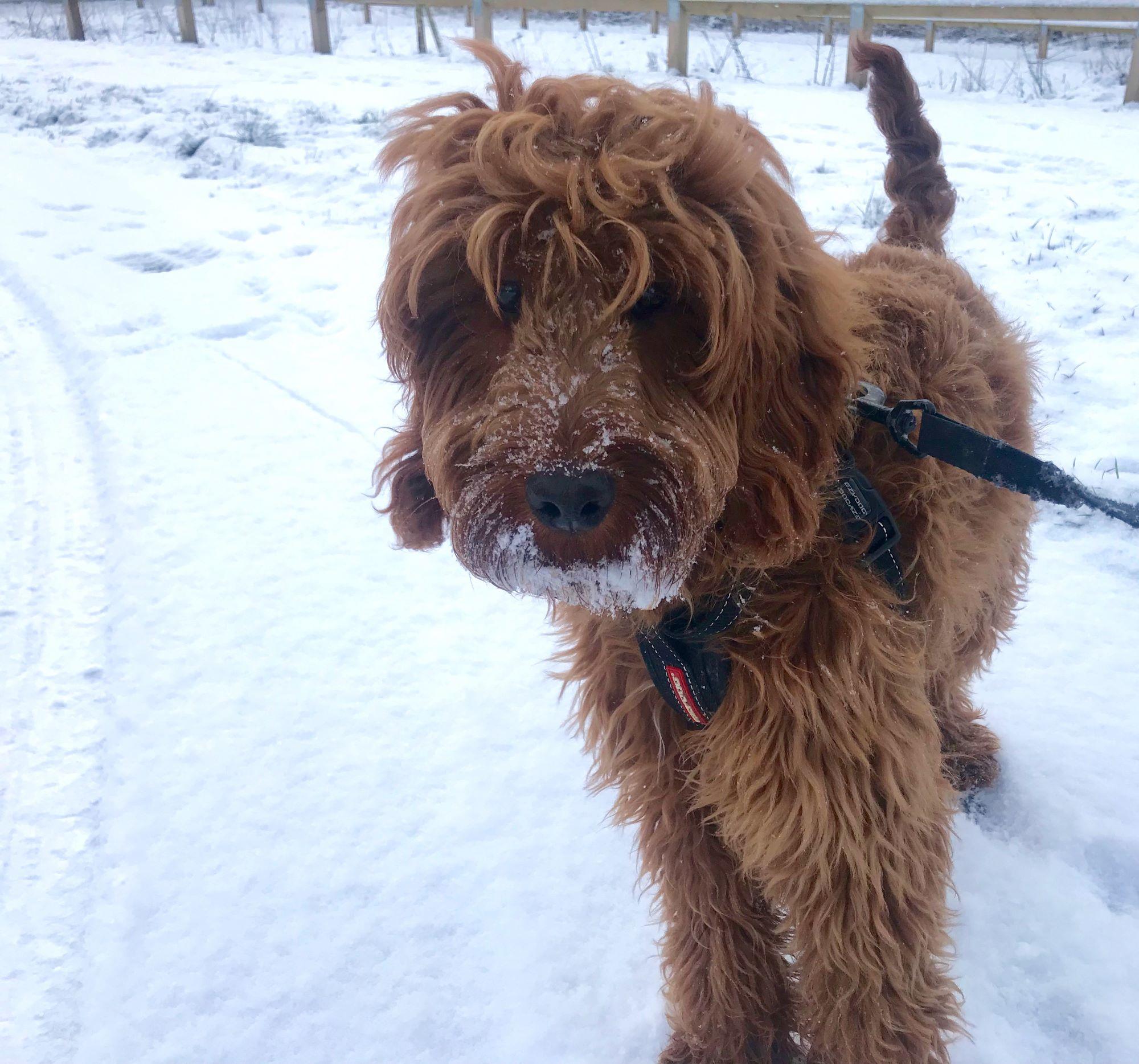 Snowy Wilson