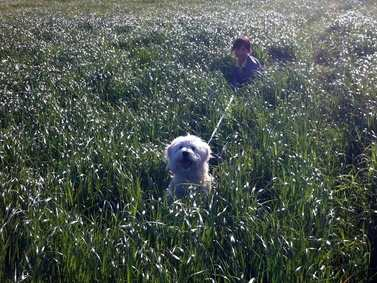 Playing in the Long Grass