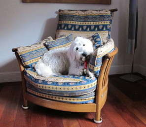 Barney in Chair
