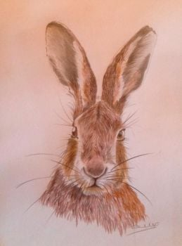 Sunday Morning Hare - SOLD
