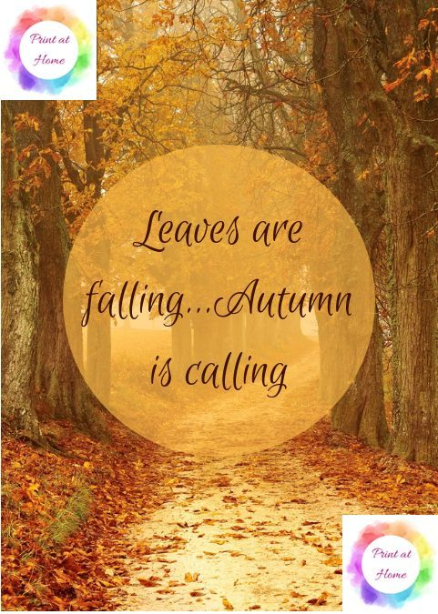 Autumn Leaves are Falling  7