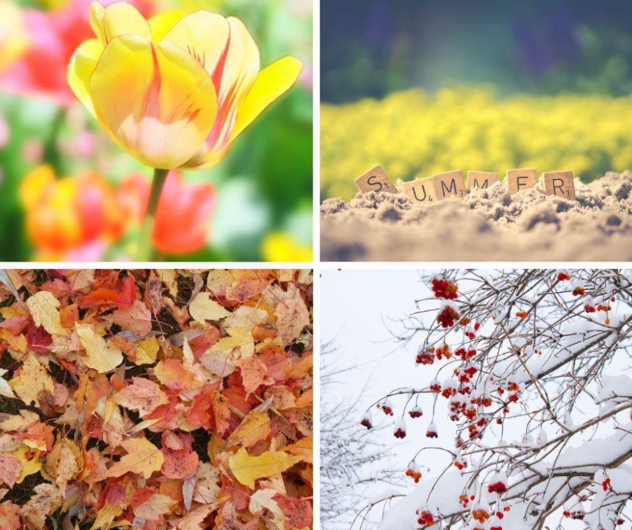 Seasonal Treatments