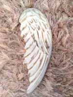 Hand Crafted White Wood Angel Wing
