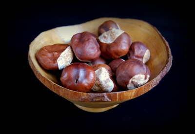 Horse Chestnuts (Buckeye)
