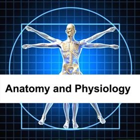 Anatomy & Physiology - Essential Online Qualification