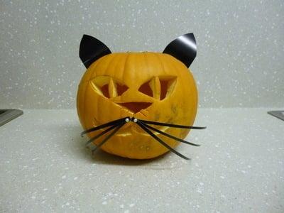 halloween pumkin cat