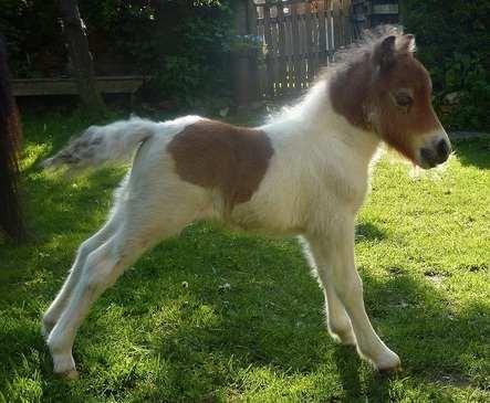 bandit foal