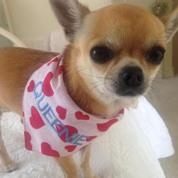 Queenie heart bandana